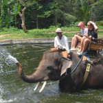 Экскурсия - сафари на слонах