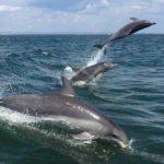 дельфины на бали